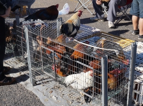 There are also people selling live poultry...