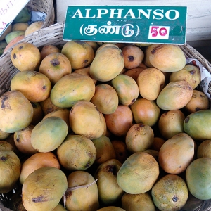 The Pappy van Winkle of Mangoes. By Thamizhpparithi Maari (Own work) [CC BY-SA 4.0 (http://creativecommons.org/licenses/by-sa/4.0)], via Wikimedia Commons