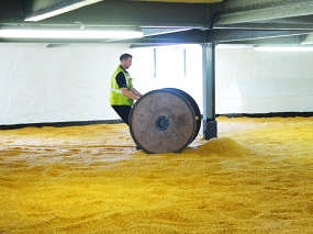 Bowmore: More barley being wheeled in