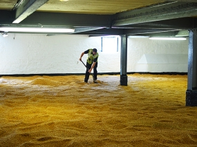 Bowmore: Barley being turned