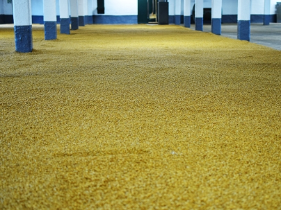 Laphroaig, Distillers' Wares: Barley on the malting floor