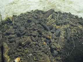 Bowmore: Peat
