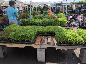 It's hard to beat this market for starters for South East Asian vegetables and herbs.