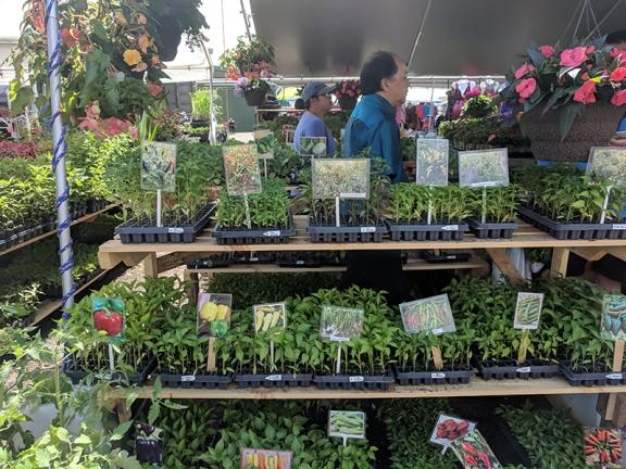 Hmongtown Marketplace: Pepper starters