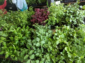 Hmongtown Marketplace: Outdoor plants