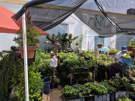Hmongtown Marketplace: More outdoor plants
