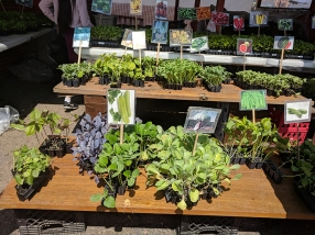 Hmongtown Marketplace: Still more veg