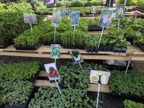 Hmongtown Marketplace: Yet more veg