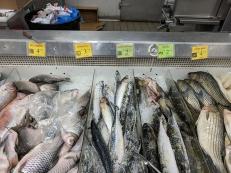 Shuang Hur: Snapper, mackerel