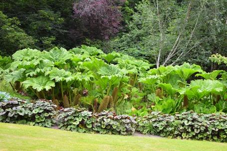 Glen Grant: Plants