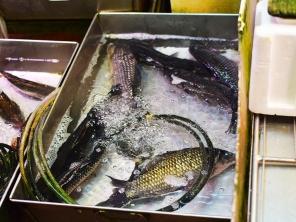 Sai Ying Pun Market, Live fish2