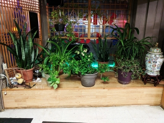 Sole Cafe: Plants