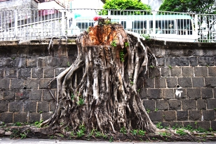 Roots are not enough