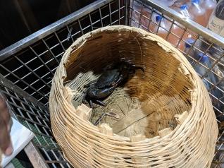 Jai Hind: Crab basket