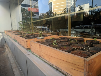 They grow their own micro-greens outside the restaurant.