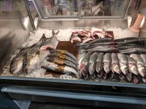 Holbox, Fish