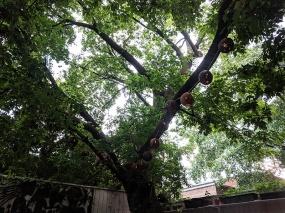 Agrikol, Tree lamps