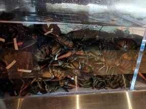 Lunasia, Even more so in the lobster tank