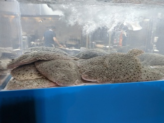 Lunasia, More crowded in the fish tank