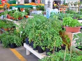 Jean-Talon 2019, Garden plants