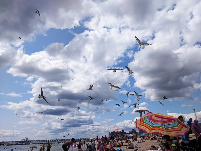 Coney Island, Birds on the beach