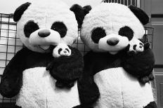 Coney Island, Nightmare pandas