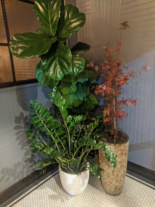 Lat14, Tropical Plants