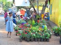 50. Assolna Market, Flowers