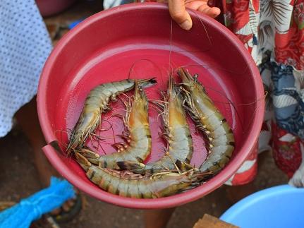 9. Assolna Market, Large prawns