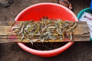 11. Assolna Market, Live shrimp