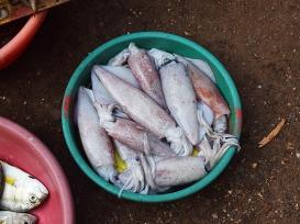 18. Assolna Market, More squid
