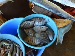 27. Assolna Market, Mystery fish
