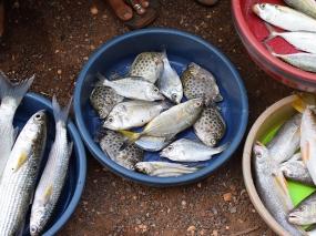 24. Assolna Market, Mystery fish