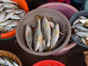 25. Assolna Market, Mystery fish