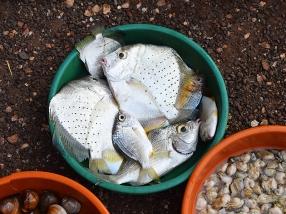 26. Assolna Market, Mystery fish