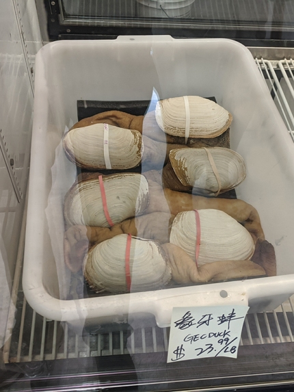 Rong Market, Geoduck