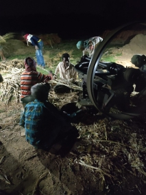 As night falls, the juicing begins. To the thud-thud-thud sound of the motor and the turning cylinders, Lokkhon-da, one of the regular farm workers, continuously feeds the cane stalks manually into the machine. The assembly line involves keeping stalks ready for him to pickup.