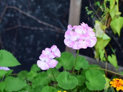 Saji-Ya, By the flowers