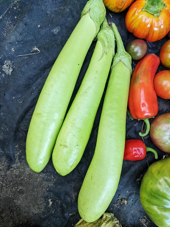 Three Thai Long Greens